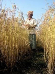 Average monthly income of a farmer is just Rs 2,400 Source:Sahaja Samrudha