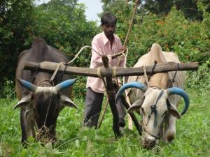 Rural India has 90.2 million agricultural families with an average monthly income of just Rs 6,426.