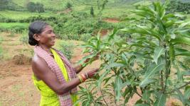 Women farmers have led to the wave of change in Kashipur with organic farming.