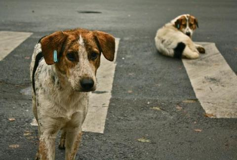 Millions of homeless dogs die every day in India. Source: Wikimedia Commons