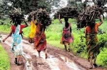 Village women carrying fuelwood back to their homes. Around 26 per cent rural women are engaged in some economic activity. Source: GOI Monitor