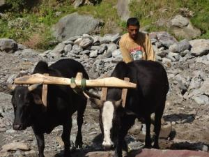 There is great fluidity of occupations in rural India.